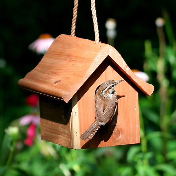 Wrens are cavity nesters that seek out a very specific entryway size — 1.25 inches.